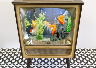 Aquarium TV